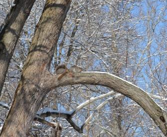 Spot the squirrels!